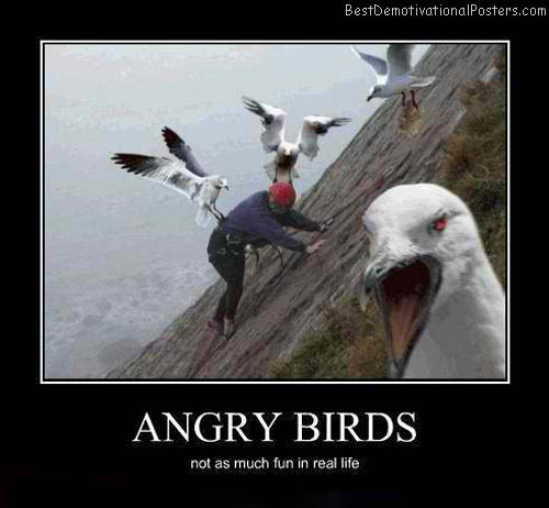 Angry-Birds-Demotivational-Poster