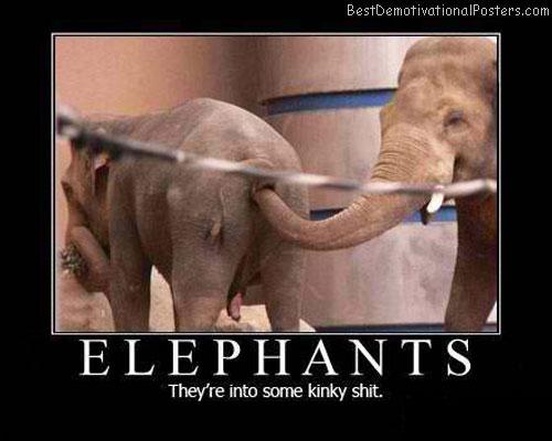 Elephants-Best-Demotivational-Poster