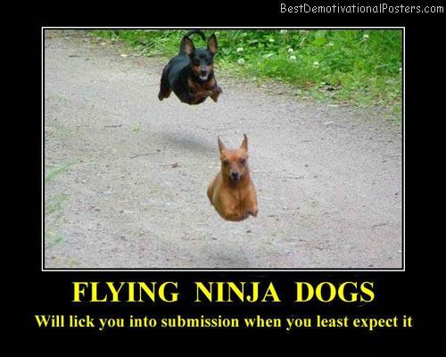 Flying-Ninja-Dogs-Demotivational-Poster