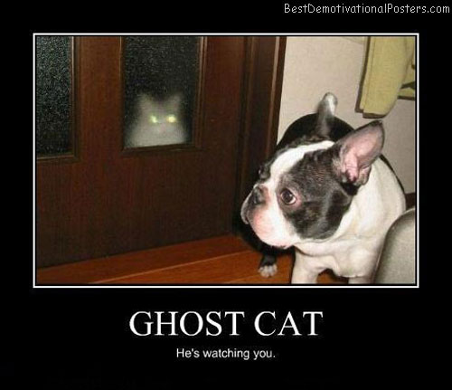 Ghost-cat-Best-Demotivational-poster