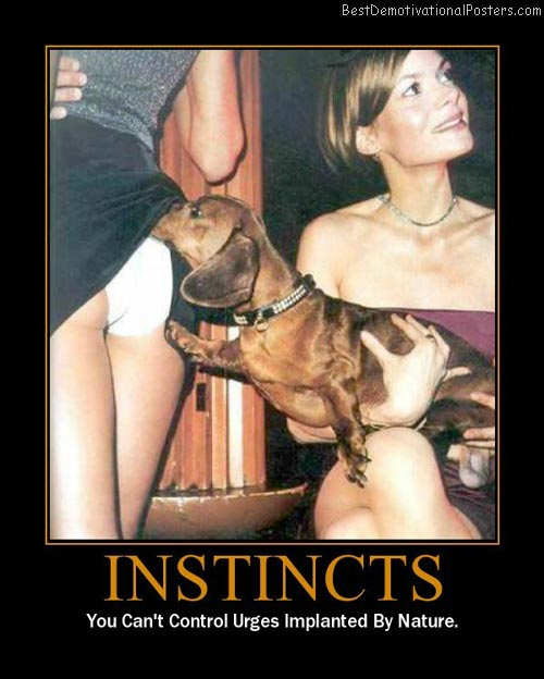 Dogs Instincts