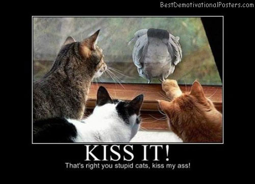 Kiss-It-Demotivational-Poster