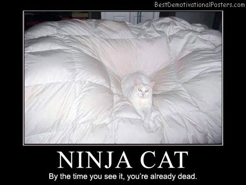 Ninja-Cat-By-the-time-you-see-it,-you're-already-dead