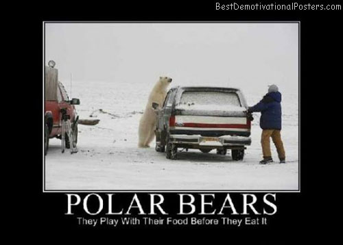 Polar-Bears-Demotivational-Poster