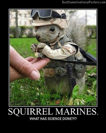Squirrel-Marines-Best-Demotivational-Poster