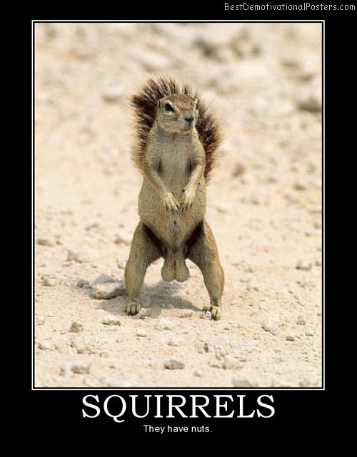 Squirrels-Demotivational-Poster