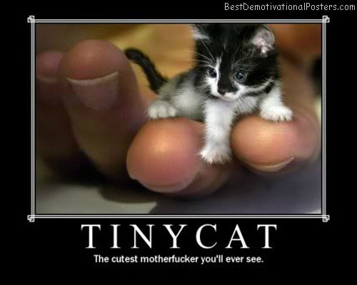 Tiny-Cat-Best-Demotivatinal-Poster