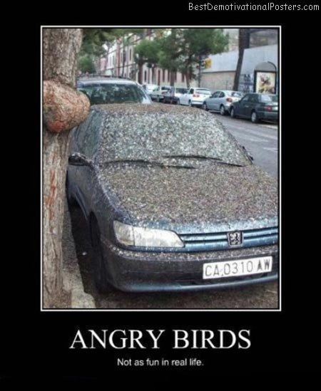 Angry-Birds-Best-Demotivational-poster