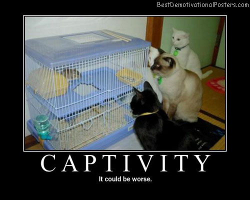 Captivity-Best-Demotivational-poster