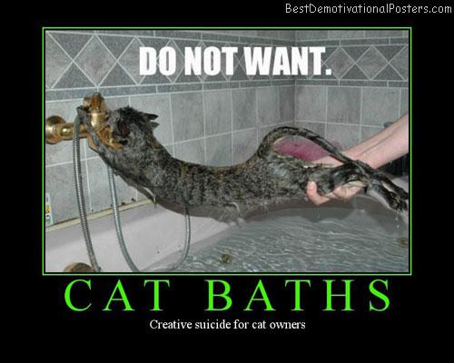 Cat-baths-Best-Demotivational-poster