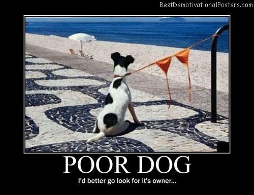 Poor-Dog-Best-Demotivational-poster