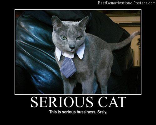 Serious-cat-Best-Demotivational-poster