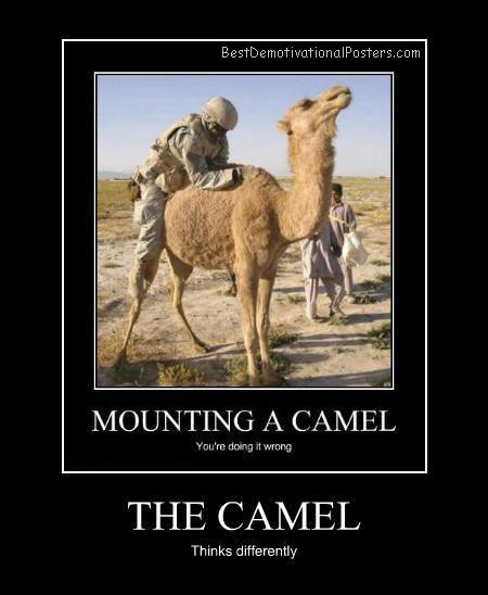 Mounting A Camel