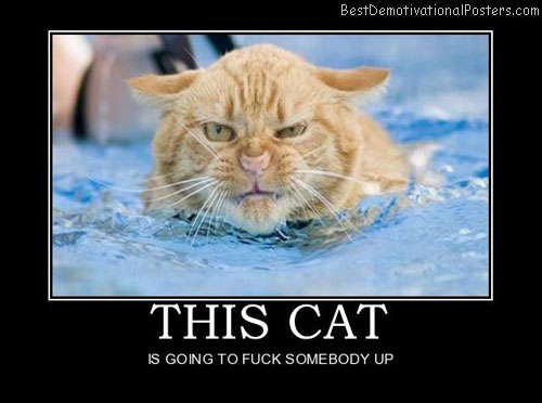 This-cat-Best-Demotivational-poster