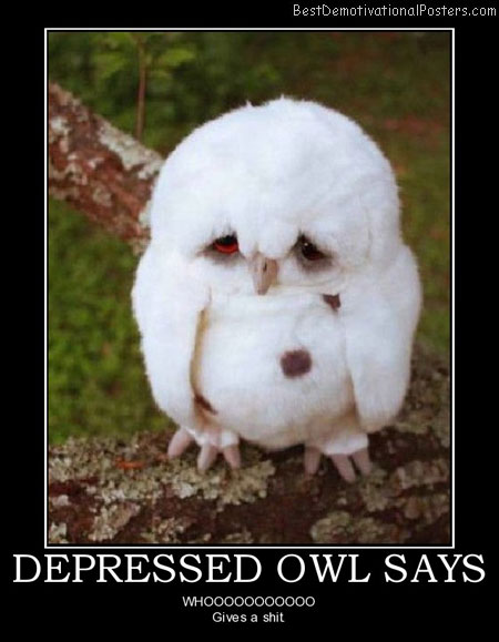 Depressed Owl Says