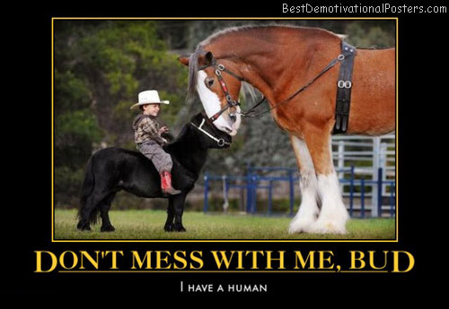 dont-mess-with-me-bud-horses-humor-best-demotivational-posters