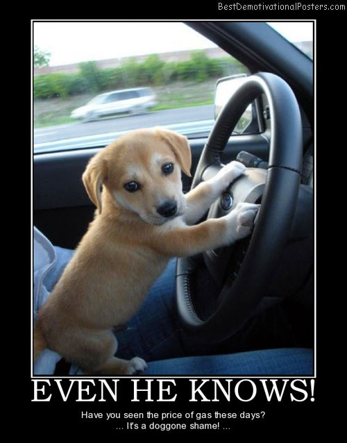 even-he-knows-gas-puppy-dog-shame-price-best-demotivational-posters