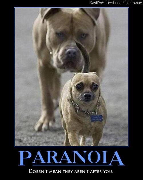 Paranoid Dog