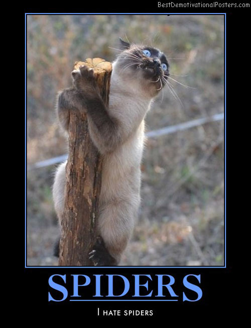 spiders-hate-spider-humor-best-demotivational-posters