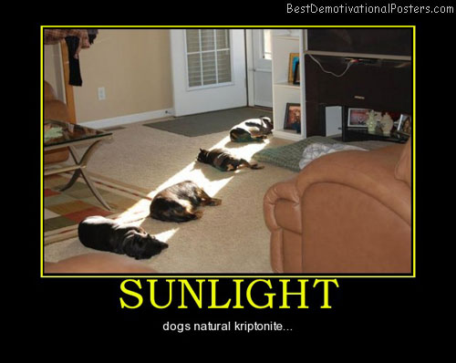 sunlight-heat-source-best-demotivational-posters