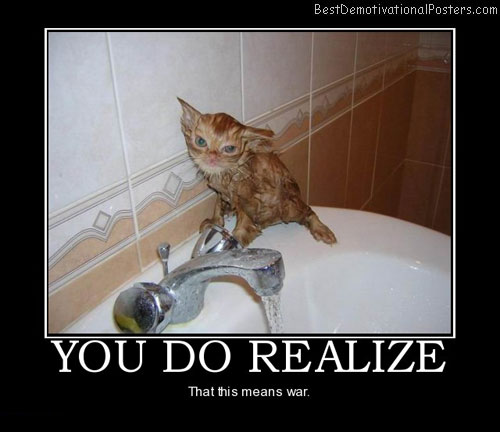 you-do-realize-cat-annoyed-war-best-demotivational-posters