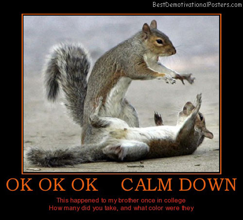 calm-down-squirrel-best-demotivational-posters