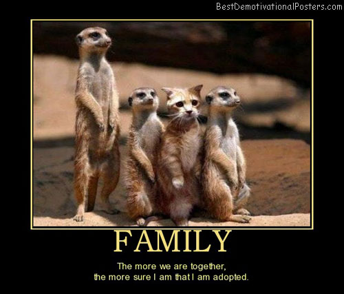 family-cat-adopted-best-demotivational-posters
