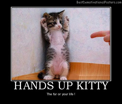 hands-up-kitty-cat-kitten-animals-best-demotivational-posters