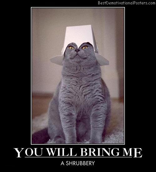 you-will-bring-me-holy-grail-cat-best-demotivational-posters