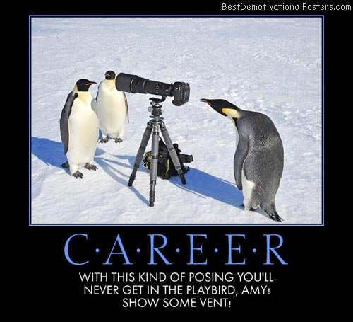 playbird-career-penguins-best-demotivational-posters