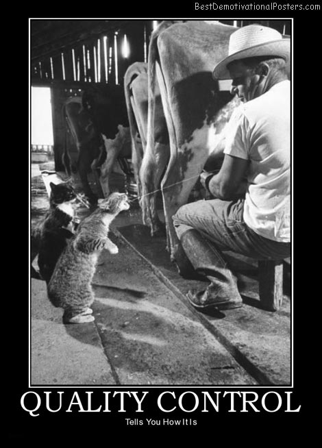 quality-control-cow-cats-best-demotivational-posters