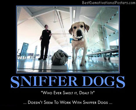 sniffer-dog-drug-smelt-dealt-best-demotivational-posters