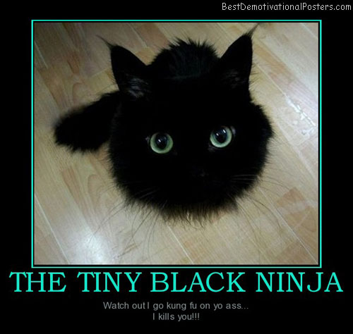 the-tiny-black-ninja-kitten-funny-best-demotivational-posters