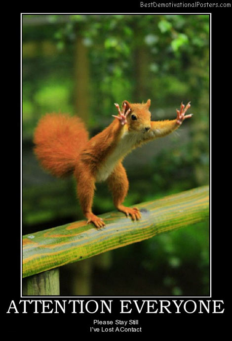 attention-everyone-squirrel-contact-best-demotivational-posters