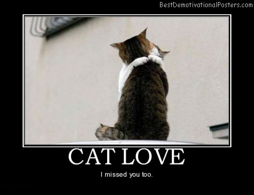 cat-love-hug-animal-best-demotivational-posters