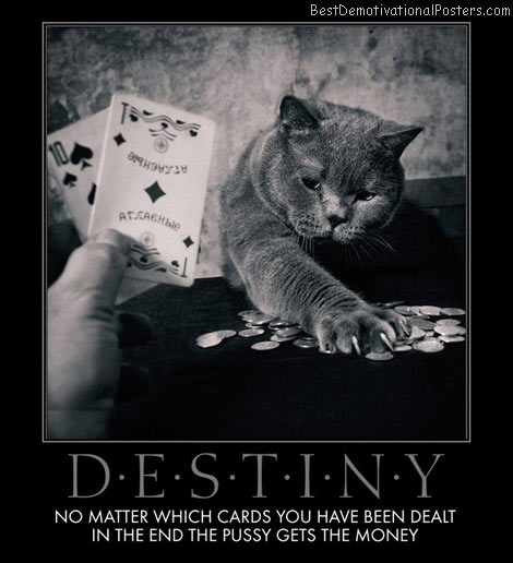 destiny-cards-poker-money-cat-pussy-best-demotivational-posters