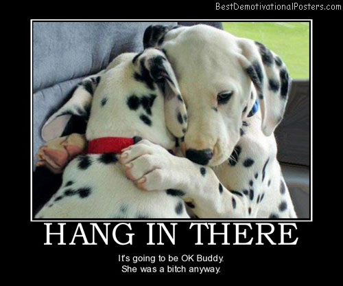 Hang In There Quotes Classy Hang In There  Demotivational Poster