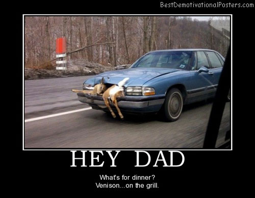 hey-dad-deer-car-accident-best-demotivational-posters