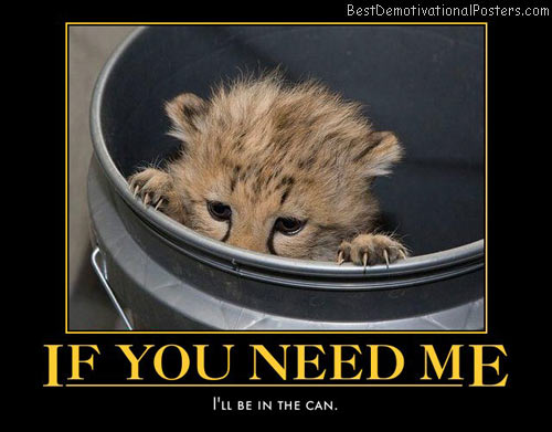 if-you-need-me-bobcat-hiding-humor-best-demotivational-posters