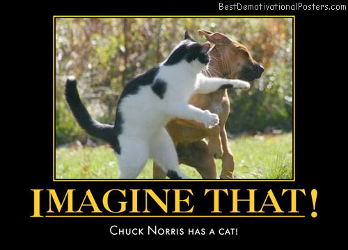 imagine-that-chuck-norris-cat-humor-best-demotivational-posters