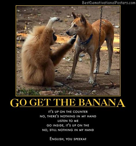 monkey-dog-communication-best-demotivational-posters