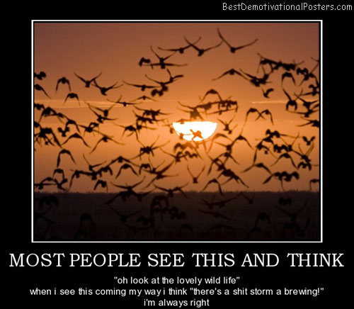 most-people-wildlife-birds-best-demotivational-posters