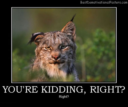 youre-kidding-right-bobcat-sceptic-humor-best-demotivational-posters