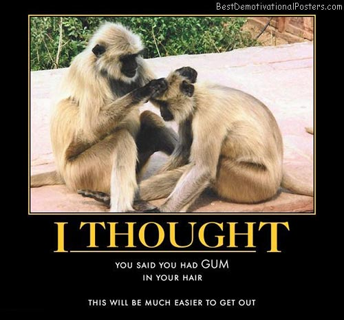 a-simple-misunderstanding-monkeys-best-demotivational-posters