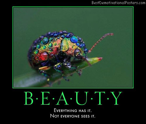 beauty-best-demotivational-posters