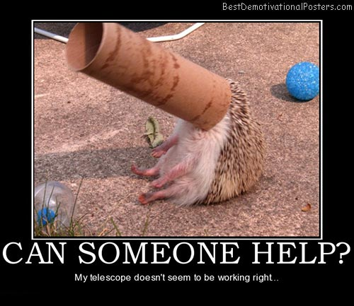 can-someone-help-hedgehog-best-demotivational-posters