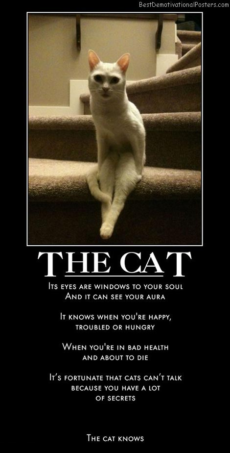 cats-eyes-secret-best-demotivational-posters
