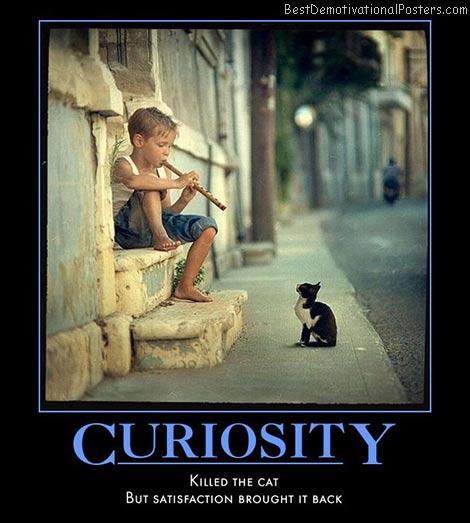 curiosity-cat-satisfaction-best-demotivational-posters