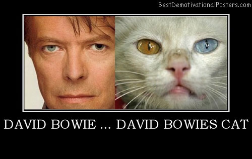 david-bowie-cat-eyes-best-demotivational-posters