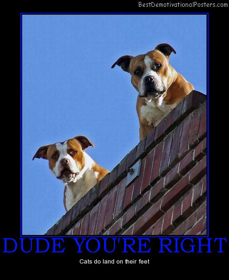 dude-youre-right-dogs-roof-cats-land-feet-best-demotivational-posters